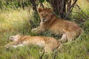 世界一周旅行記 ケニア