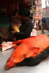 世界一周旅行記 ネパール